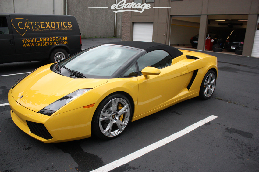 Gallardo Cats Exotics